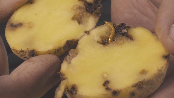 Bauer versus Umweltschützer – Wenn im Essen der Wurm drin ist