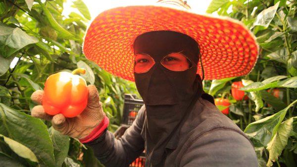 Schaden Pestizide der menschlichen Gesundheit?