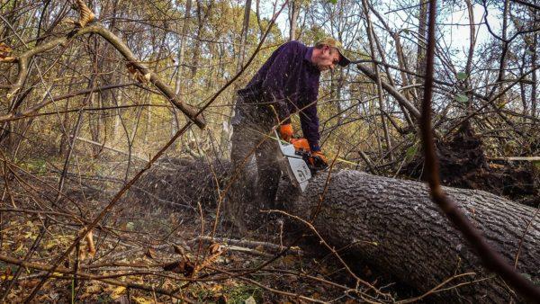 Steirische Eichen aus ukrainischen Wäldern