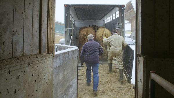 Folgenloser Regelbruch: Grauzone Tiertransporte